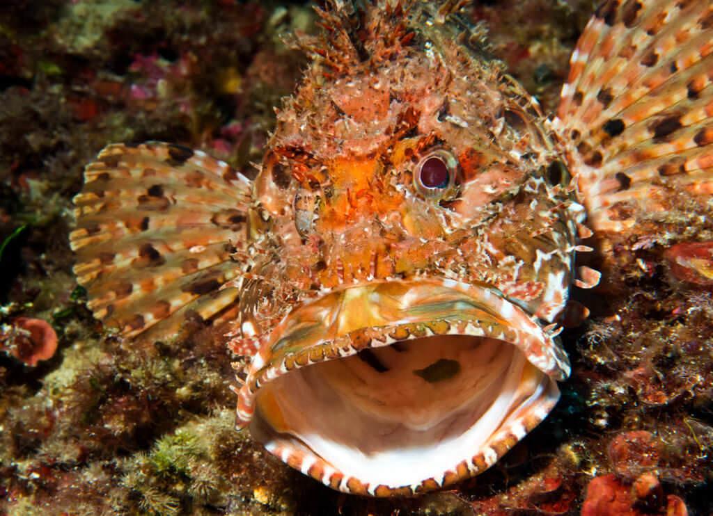 mallorca diving dragonera